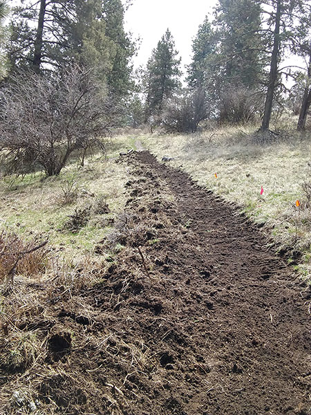 A section of new trail - still needs some buffing